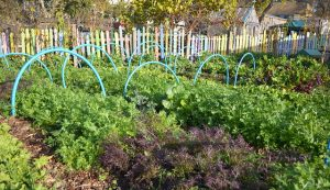 Salad beds - Permaculture Association